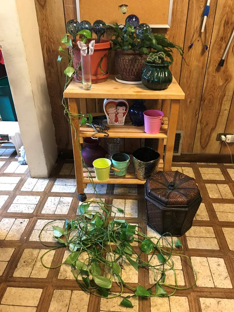 Lot # 71 - One Philodendron Plant, 2 Cacti, Vases of Various Sizes & Plant Stand on Casters  (main image)