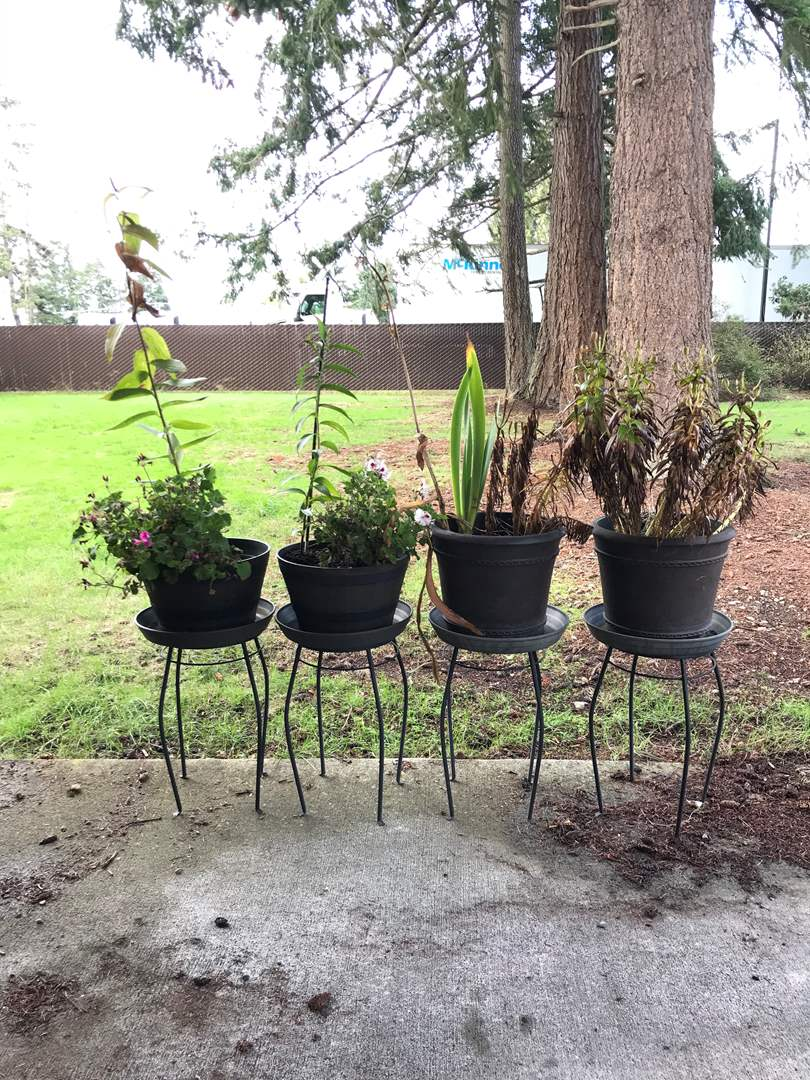 Lot # 128 - 4 Potted Plants on Plant Stands (main image)
