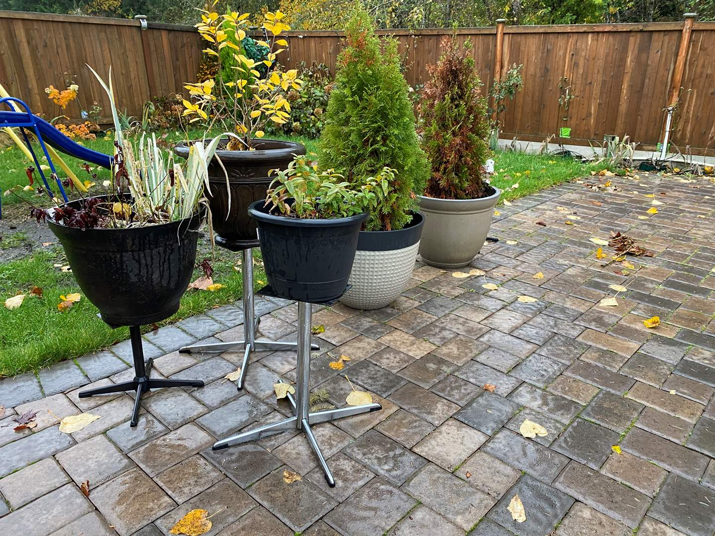 Lot # 374 - Potted Plants & Plant Stands (main image)