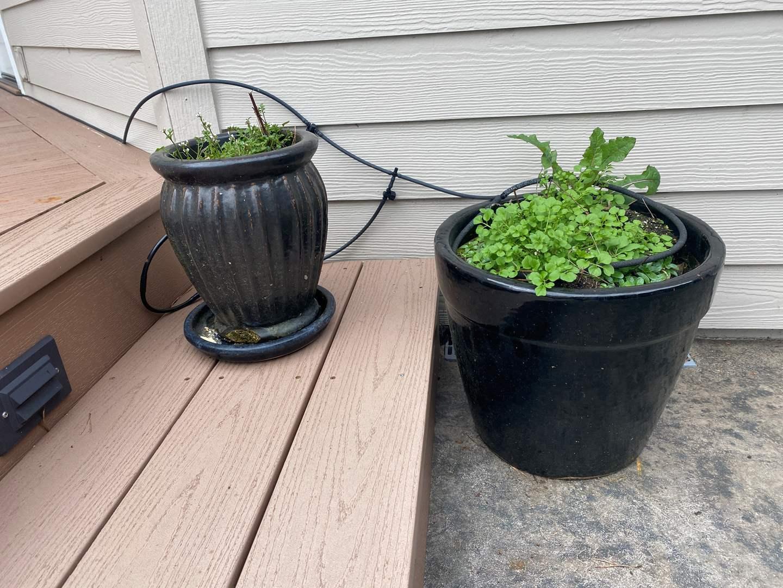 Lot # 92 - Two Nice Ceramic Flower Pots w/Dirt (main image)