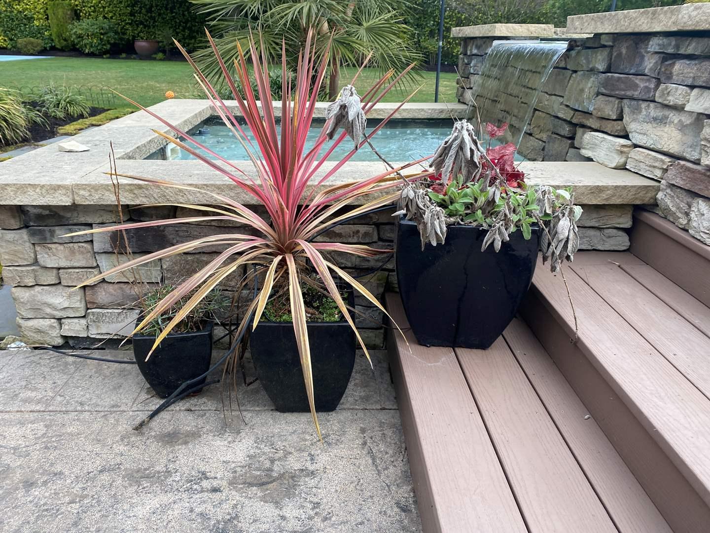 Lot # 93 - Three Ceramic Flower Pots w/Plants (main image)