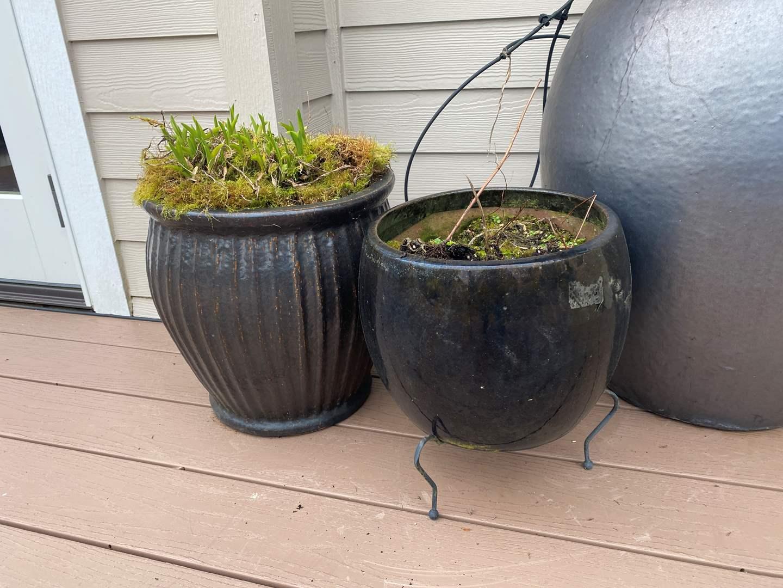 Lot # 94 - Two Ceramic Flower Pots w/Dirt  (main image)