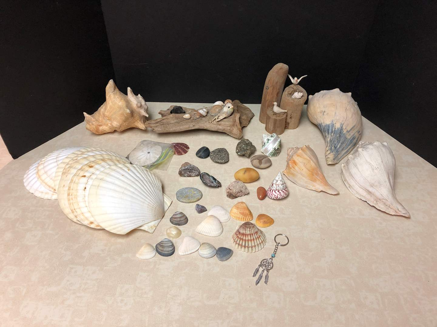 Lot # 150 - Collection of Rocks & Shells  (main image)