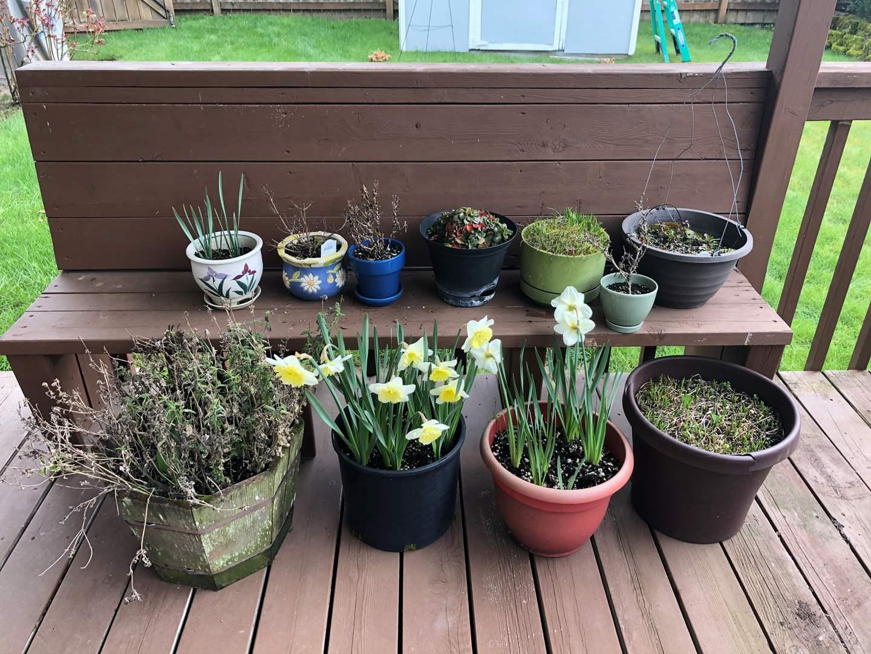 Lot # 243 - 11 Flower Pots w/Plants  (main image)
