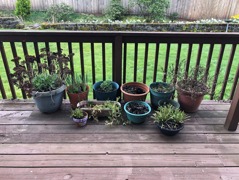 Lot # 245 - 11 Flower Pots w/Plants  (main image)