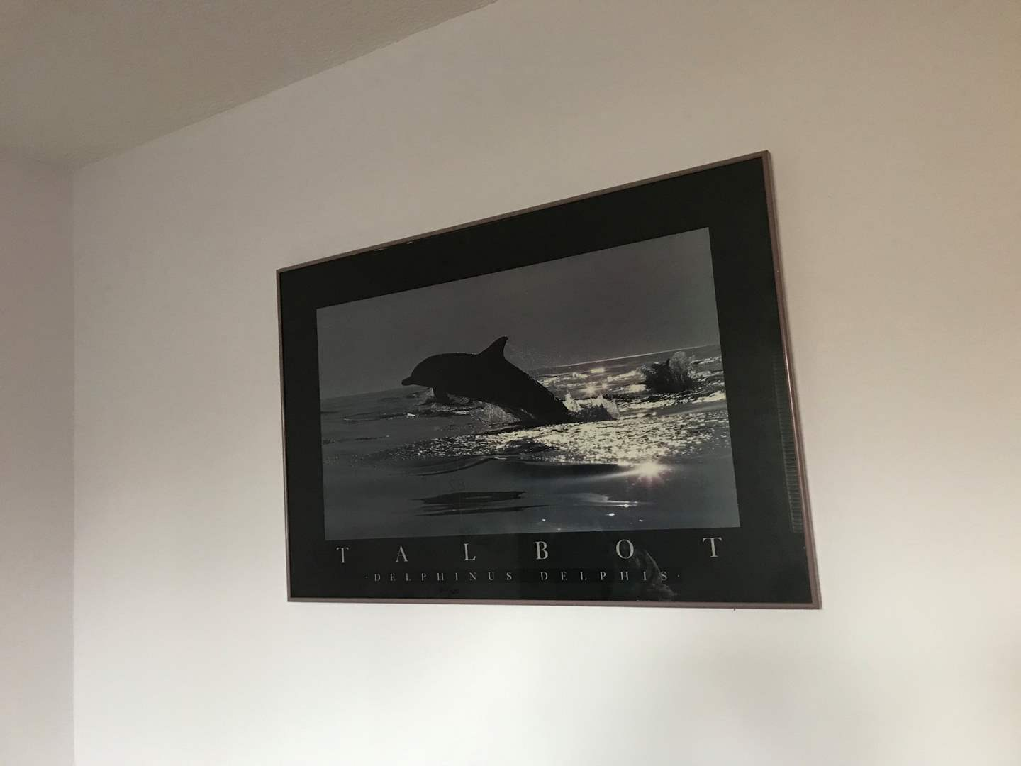 "Lot # 83 - Large ""Talbot"" Dolphin Print  (main image)"