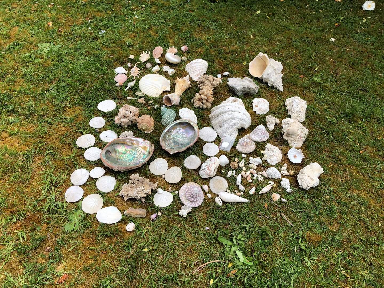 Lot # 269 - Large Selection of Shells & Abalone Shells (main image)