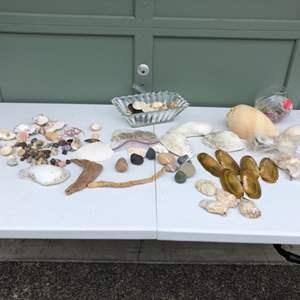 Lot #287 - Selection of Sea Shells & Rocks