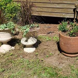 Lot # 230 Pots & Plants