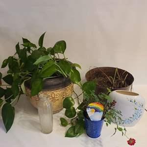 Lot # 116 Household Plants & More