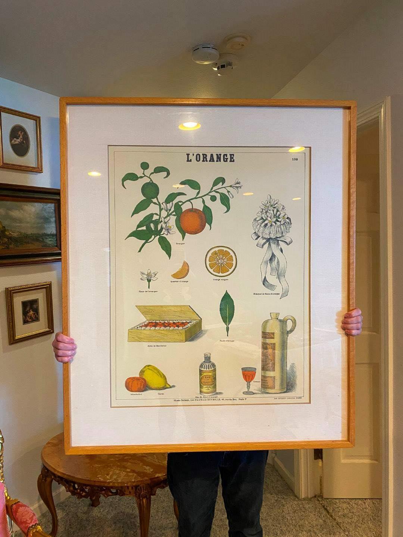 """Lot # 177 - Large Framed Emile Deyrolle """"L'Orange"""" Poster (main image)"""
