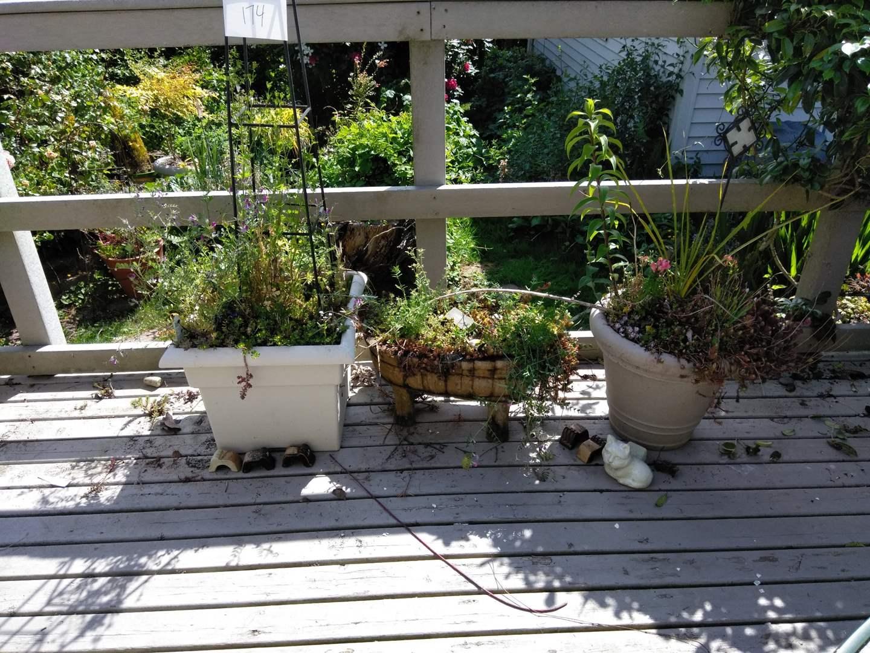 Lot # 174 - 3 plants and pots, ceramic pot feet, metal trellis (main image)