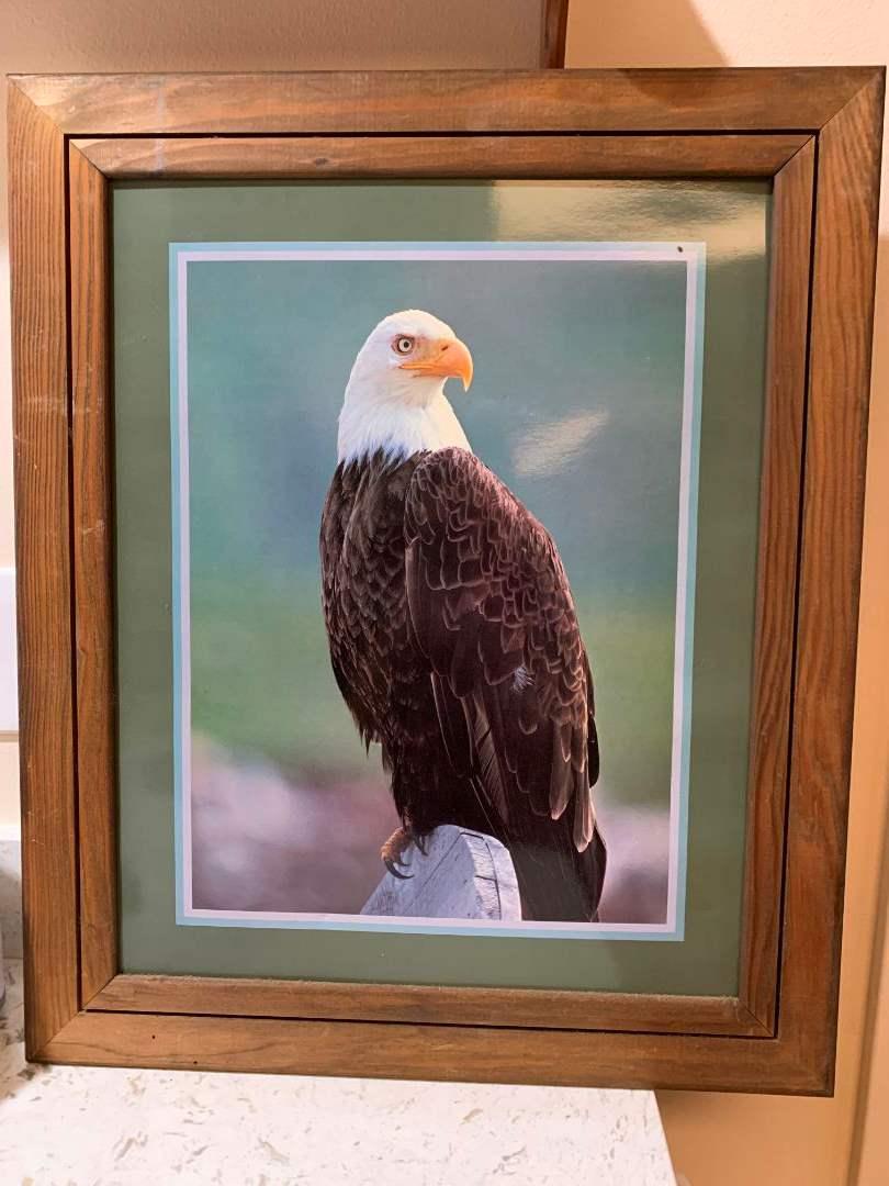 58 Eagle Print Picture (main image)