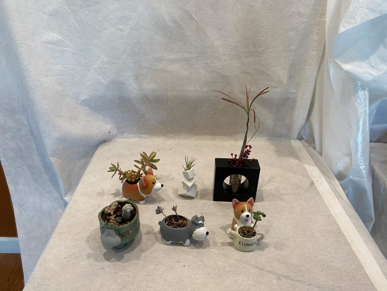 Lot # 97 Lot of Miniature Succulents (main image)