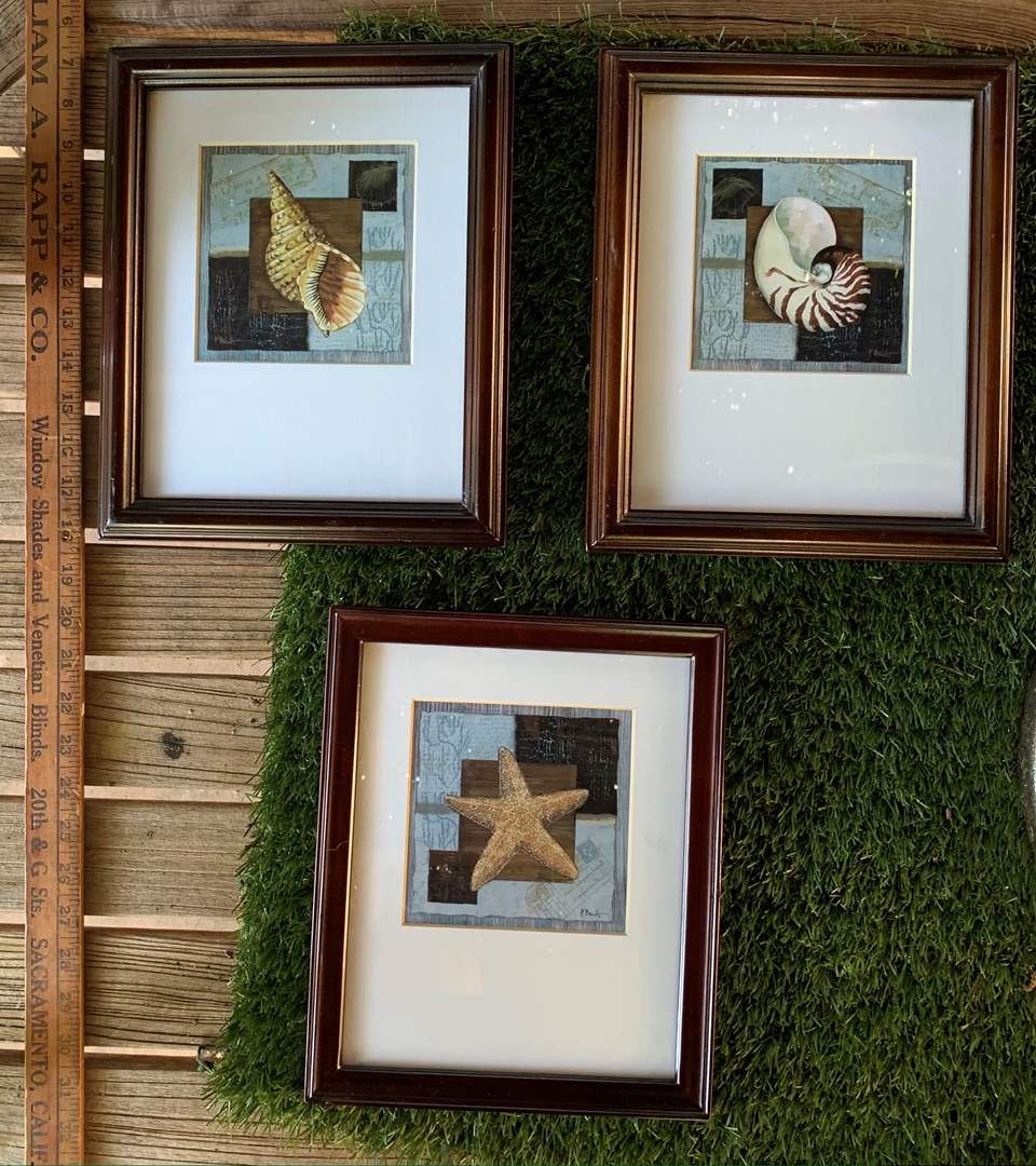 Lot # 113 P. Brent Signed Sea Shell Prints Vintage type Wood Frame (main image)