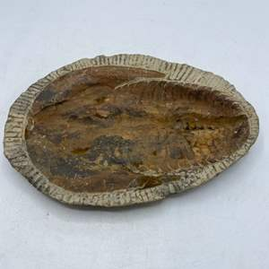 Lot # 29 Fossil Stone