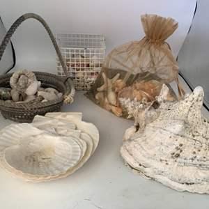 Lot # 7 Lot of Sea Shells