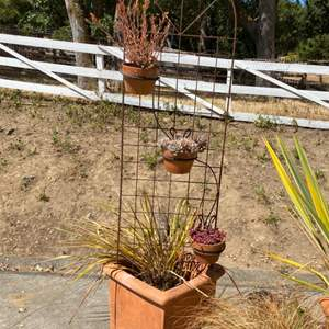 Lot # 21 Large Potted Plant with Wrought Iron and 3 Succulents