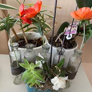 Lot # 57 Lot of Orchid Plants (With Vases) and Bud Plant Vases
