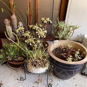 Lot # 72 Lot of Plants