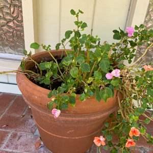 Lot # 193 Flower Making Plant