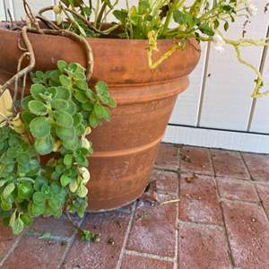 Lot # 194 Potted Plant