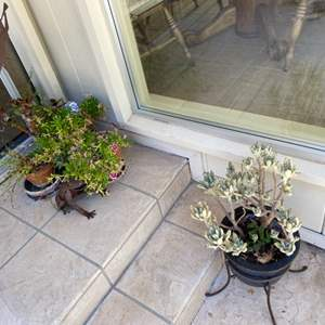Lot # 195 Lot of Plants and Outdoor Decor