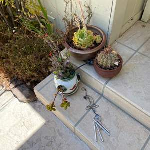 Lot # 196 Lot of Plants and A Wind Chime