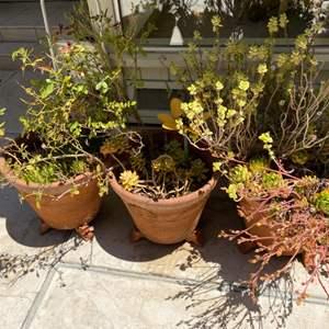 Lot # 202 Trio of Plants