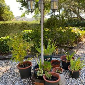Lot # 213 Lot of Plants With Outdoor Post Light (Not a REAL Light - I don't think)