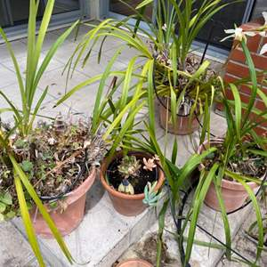 Lot # 216 Lot of 4 Potted Plants