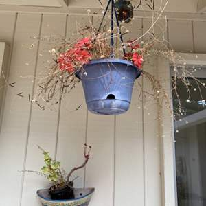 Lot # 224 Hanging and Mounted Potted Plants