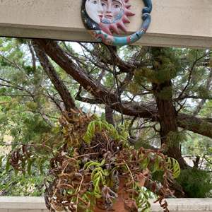 Lot # 228 Sun and Mood Plant Hanger with Plant
