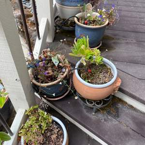 Lot # 268 Four Potted Plants with Decorations