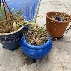 Lot # 271 Three Potted Plants with Blue Frog Decoration