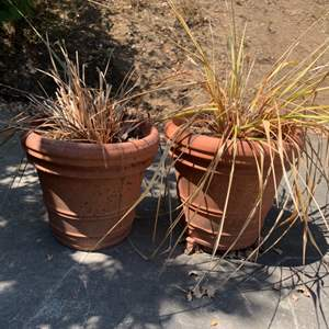 Lot # 394 Lot of 2 Outdoor Potted Plants
