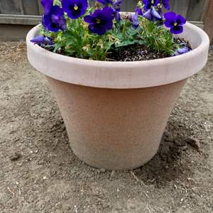 Lot # 250 Potted Plant 3