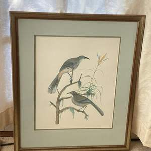 Lot # 43 Andrew Jackson Grayson Painting Plate II4 Curve-Billed Thrasher