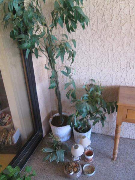 Lot # 187 - 2-Lamps, Potted Trees & Planting Pots (main image)