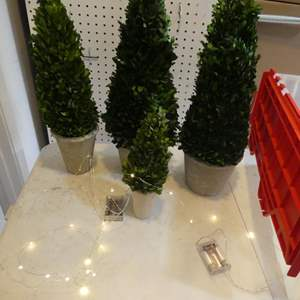 Lot # 342- cute decorative miniature trees. About 1-4 ft