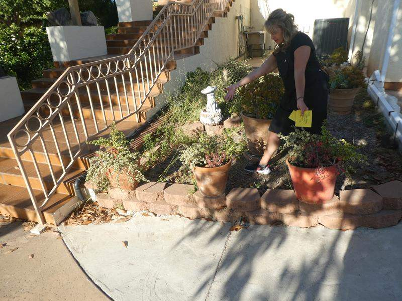 Lot # 304-Yard art and planters, 4 potted succulents (main image)