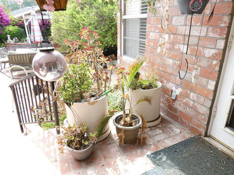 """Lot # 310-4 Large planters with plants (21"""" tall), 2 small, 2 hanging and decor. (main image)"""