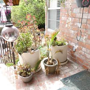 """Lot # 310-4 Large planters with plants (21"""" tall), 2 small, 2 hanging and decor."""
