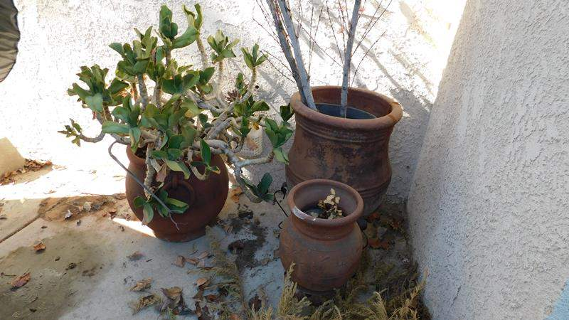 Lot # 392- Three Rustic Planter Pots  (Two with stands) (main image)