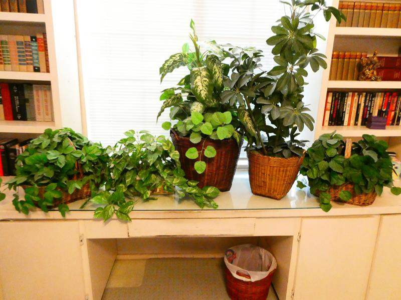 Lot # 215-Five artificial plants, 3 baskets, contents included (main image)
