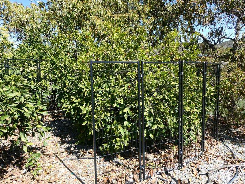 Lot # 76- Modular fencing/ dog kennels (main image)