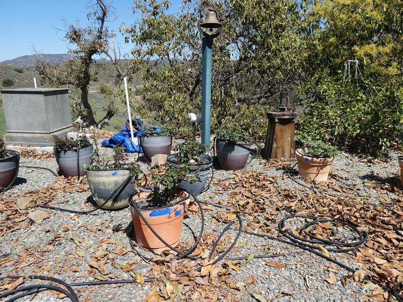 Lot # 83- Outdoor planters-9 pots with flowers  (main image)