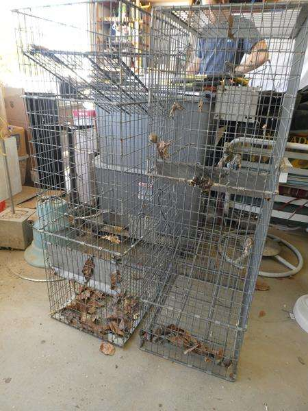 Lot # 189- Need to catch a critter?  3 animal cages- 48x22 (main image)