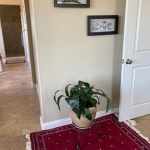 Lot # 98-Rug, plant & stand along with 5 pictures