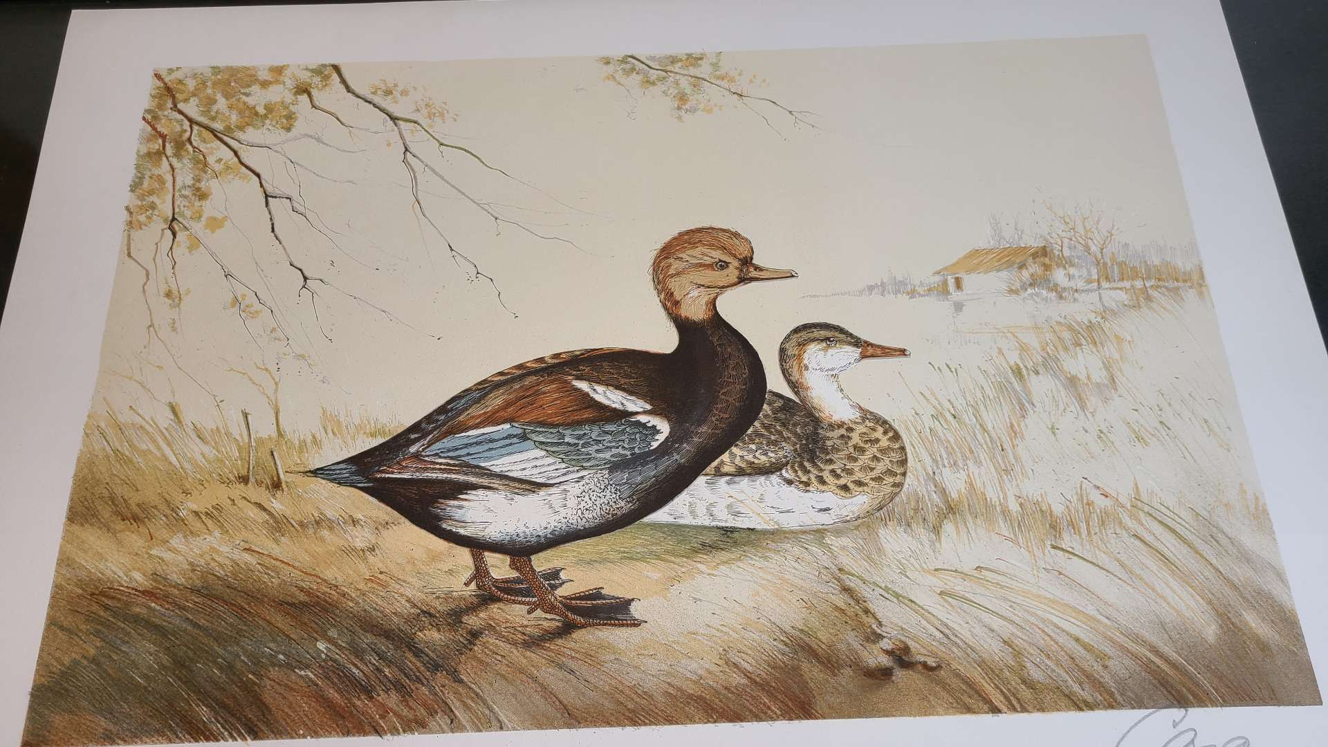 Lot # 218 Common Loon Signed Lithograph
